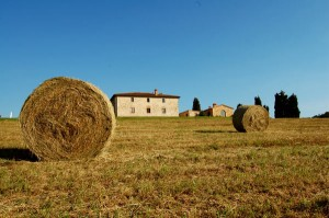 tuscan haystacks