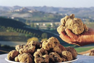 XIV Exhibition of the white truffle in Tuscany