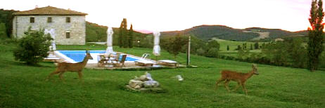 deers in tuscan cottage with pool