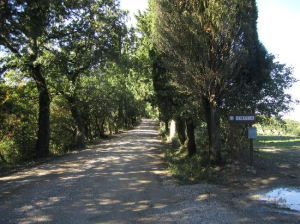 the street of pignano