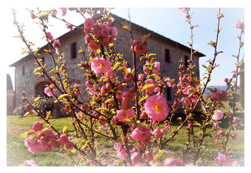 Photo spring in a Tuscan villa for rent