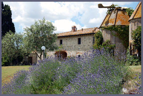 villa in tuscany with lavander plants