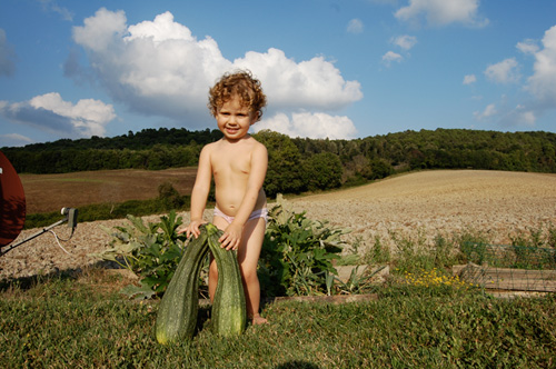 italian big and organic zucchini