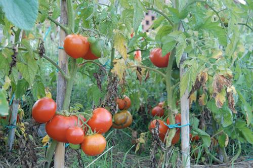 tomato sauce of ours villa