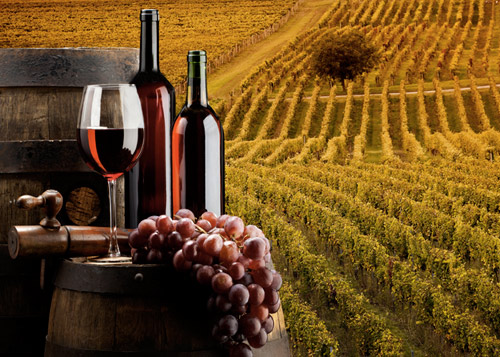 wine tour and wine tasting with sommelier in tuscany villa