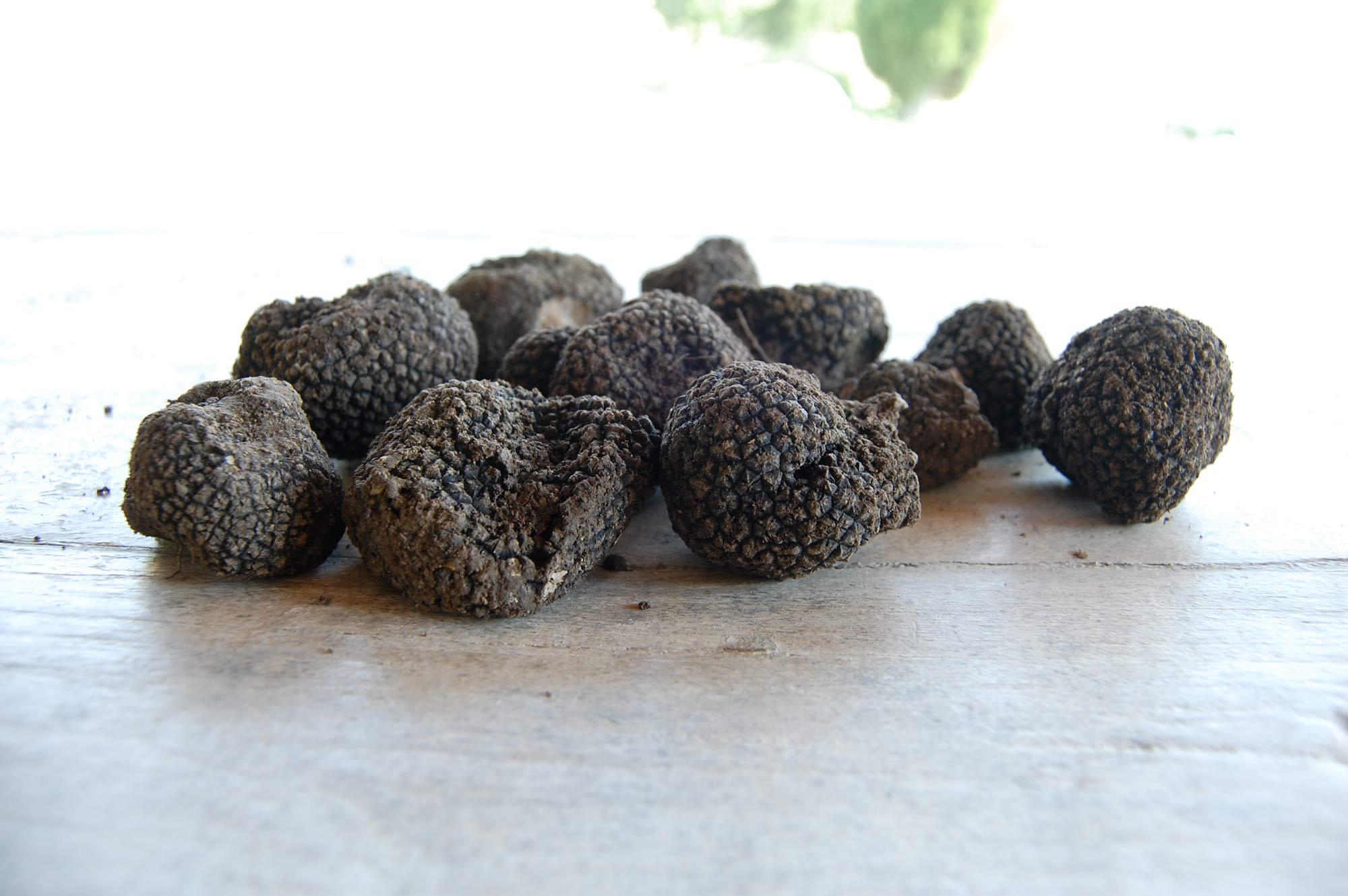 truffle tuscany villa